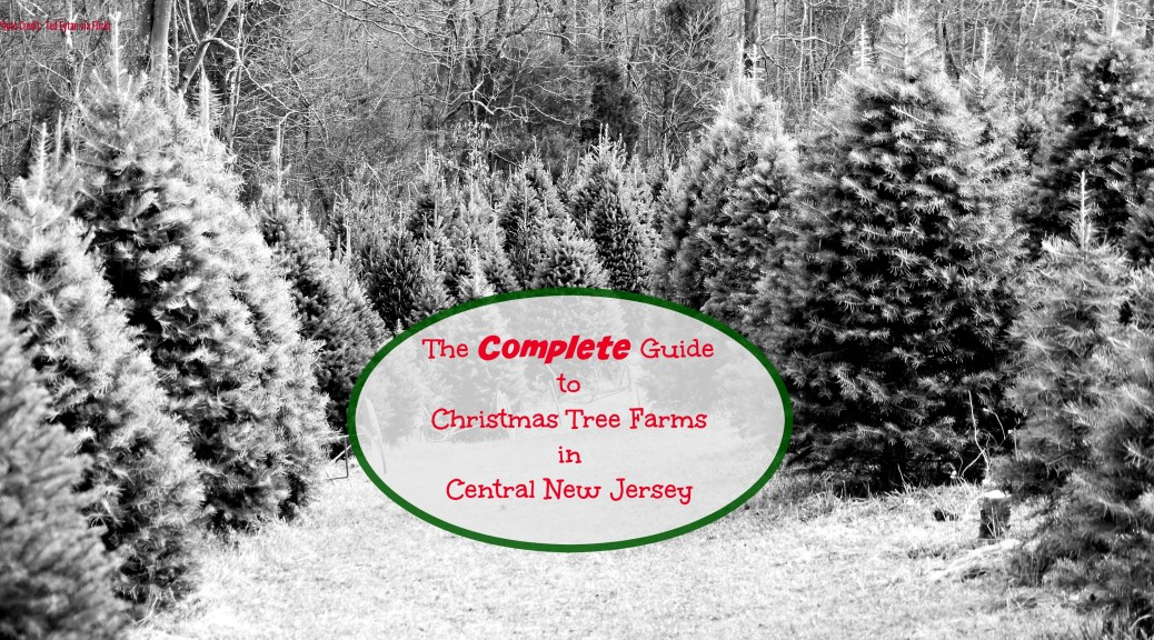 The COMPLETE Guide to Christmas Tree Farms in Central New Jersey! | Find out more at www.thingstodonewjersey.com | #nj #newjersey #christmas #christmastreefarms #christmastree #farms #centralnewjersey #princeton #somerville | Christmas tree farms in Central Jersey