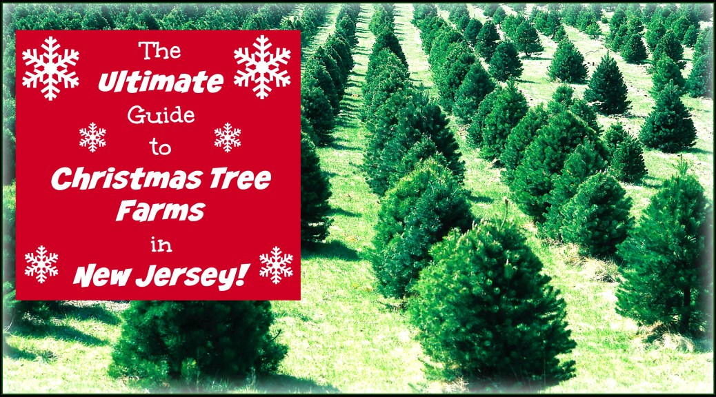 New Jersey is home to MANY beautiful choose and cut Christmas tree farms! Find one near you using Things To Do In New Jersey's ULTIMATE guide to Christmas tree farms in New Jersey! | find out more at www.thingstodonewjersey.com | #nj #newjersey #christmas #christmastree #christmastreefarms #chooseandcut #thingstodo