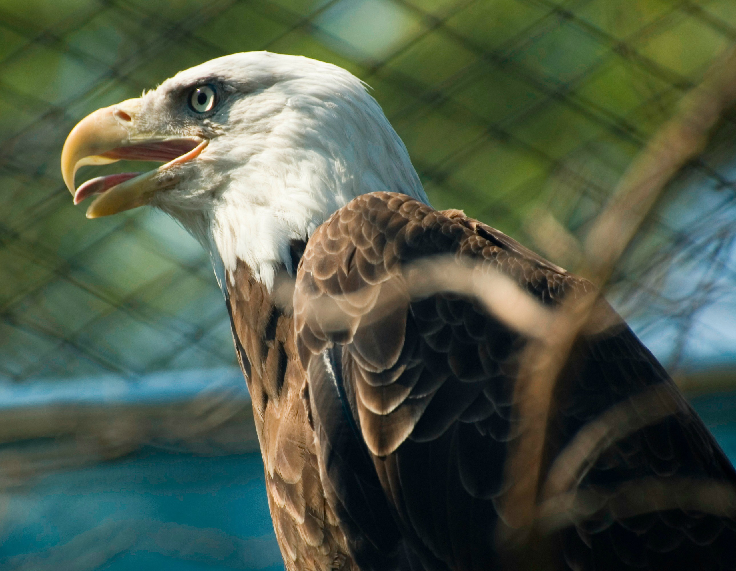 things to do in new jersey - visit the cape may zoo! - things to do