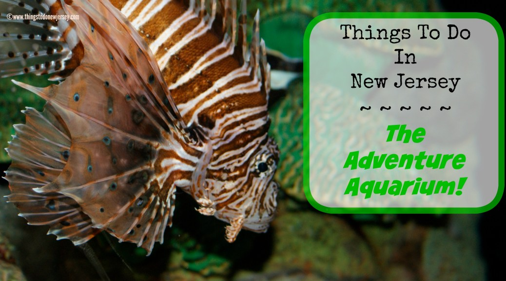 The Adventure Aquarium in Camden, NJ is an awesome day trip!! | find out more at www.thingstodonewjersey.com | #nj #newjersey #adventureaquarium #camden #thingstodo #camdenwaterfront #daytrips #fieldtrips #springbreak #rainyday #fun #familyfriendly #kids #animals