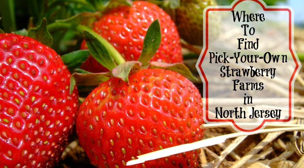 The Complete Guide to Strawberry Picking in North Jersey. Find a northern New Jersey pick-your-own farm here! | find out more at www.thingstodonewjersey.com | #nj #newjersey #northjersey #farms #pickyourown #strawberry #strawberrypicking #morriscounty #chester #morristown #sussexcounty #andover #warrencounty #hackettstown #belvidere #familyfun #jerseyfresh