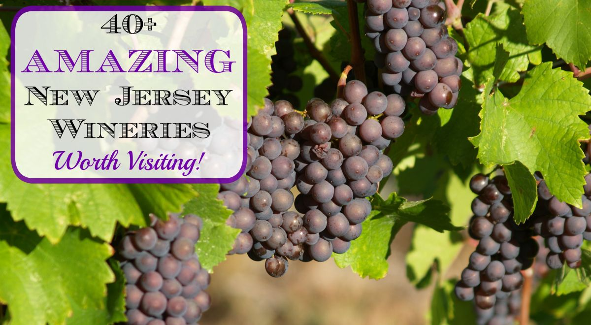 40+ Amazing New Jersey Wineries Worth Visiting