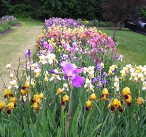 Presby Memorial Iris Gardens in Montclair NJ | public gardens in nj | public gardens in new jersey | nj public gardens | new jersey public gardens | nj botanical gardens | nj iris gardens