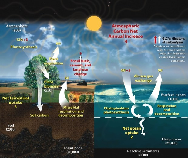 Carbon-cycle