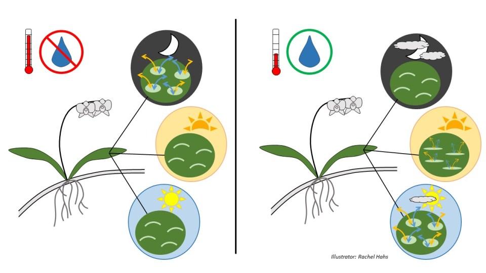 Diagram_CAM Plants_strategy