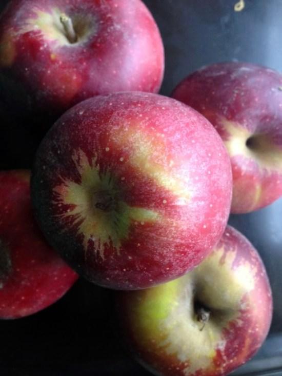 arkansas-black apples