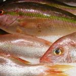 Mercury Releases to Air and Rivers Contaminate Ocean Fish