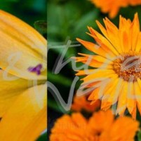 photography, seattle floral, flowrs, daisy, daisies, Keith Morgan