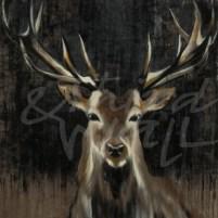 lodge, antlers deer, stag, buck, animal, liz jardine