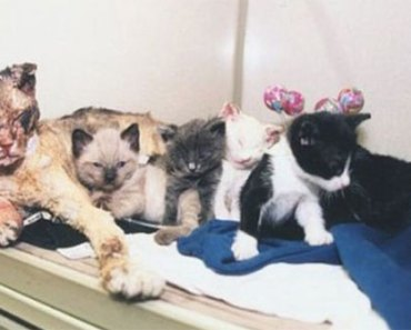 cat-rescues-kittens