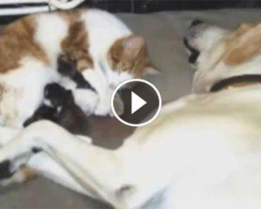 dog-helps-cat