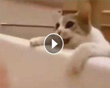 cat-bathtub
