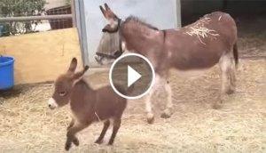 happy-donkey
