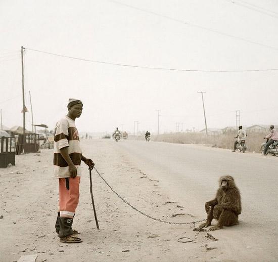 africanmonkeypet