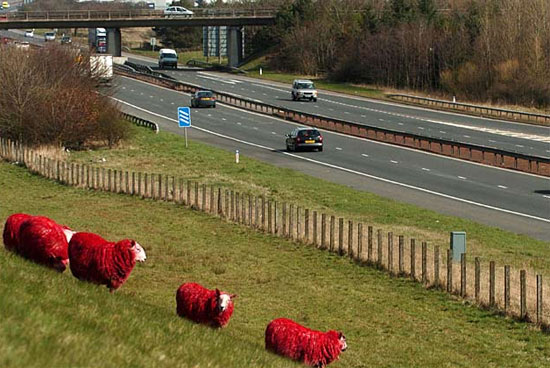 red-sheeps-high-way