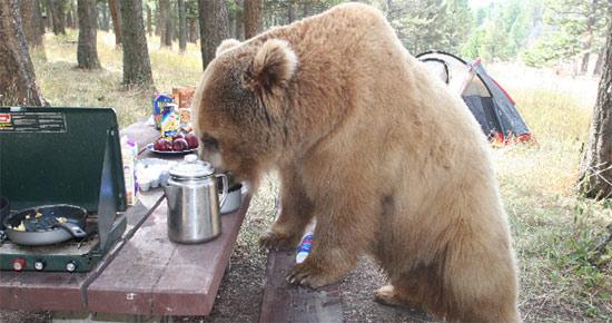 bear-picnic