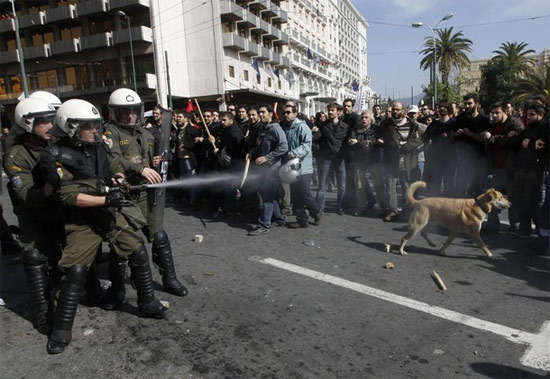 dog-at-riots