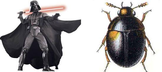 darth-vader-bug