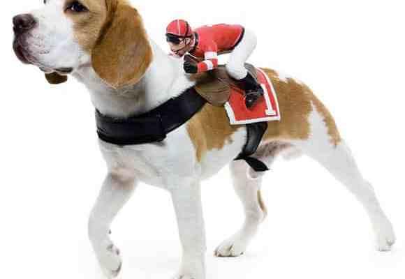 Dog Rider Costume2