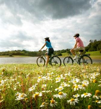 11858666-couple-cycling-with-daisies-dbbw0621-portrait-co