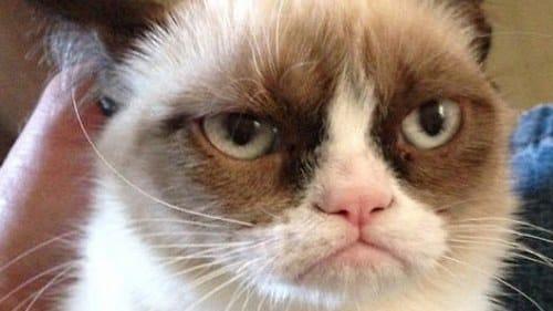 Grumpy Cat famous internet cats