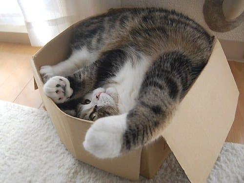 Maru the Cat famous internet cats