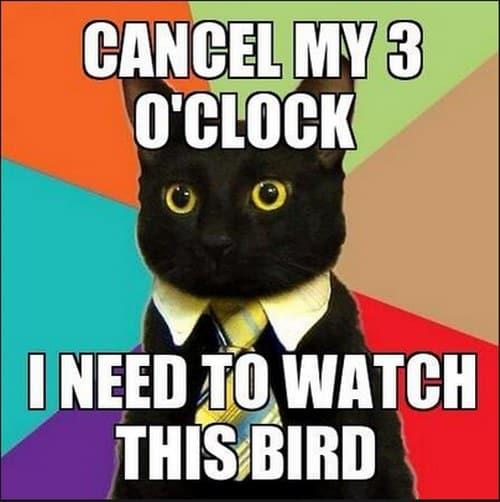 business cat famous internet cats