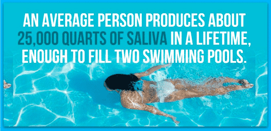 Saliva and Incredible Facts about the Human Body