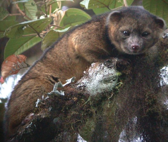 newly discovered animals