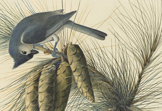 New York Historical Society audubon