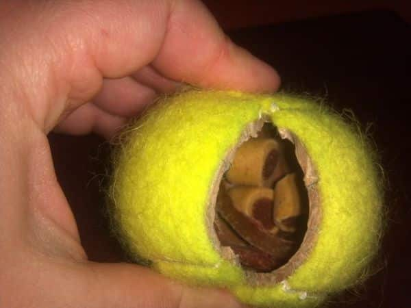 Making A Treat Ball Counts As One Of The Amazing Hacks For Every Dog Owner