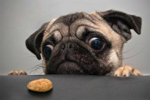 Facts About Dogs And Food Warn Us Of Dangerous Aliments