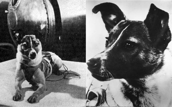 Laika - Most Famous Dogs Of All Time