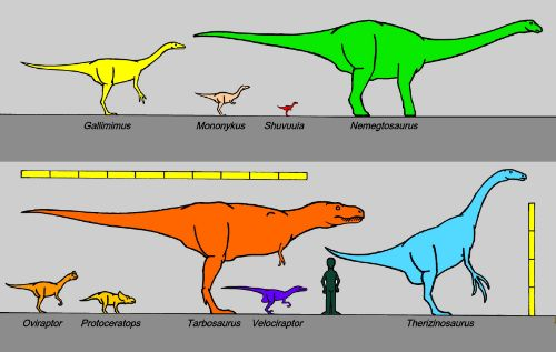 Sizes, Among The Amazing Facts About Dinosaurs