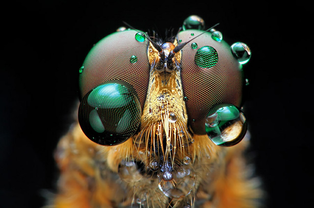 Magnificent Macro Photos of Insect Eyes by Shikhei Goh Colossal