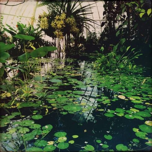 Lillypads - Conservatory of Flowers