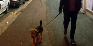 Urban hound: What a dog taught me about city living