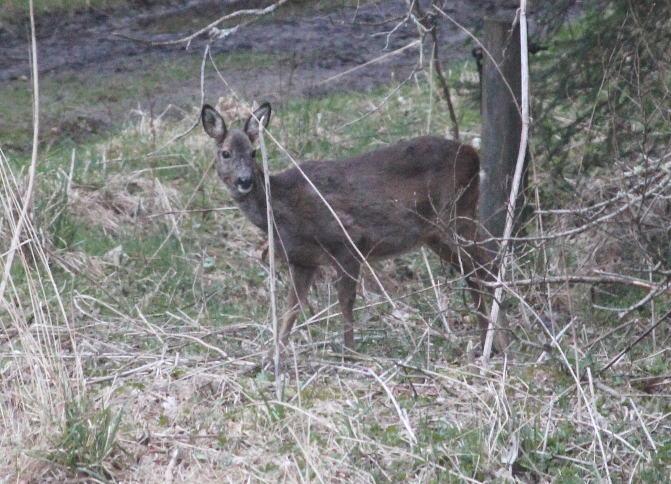 Local Neighbourhood Wildlife