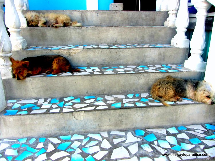 Dogs napping on steps in Belize