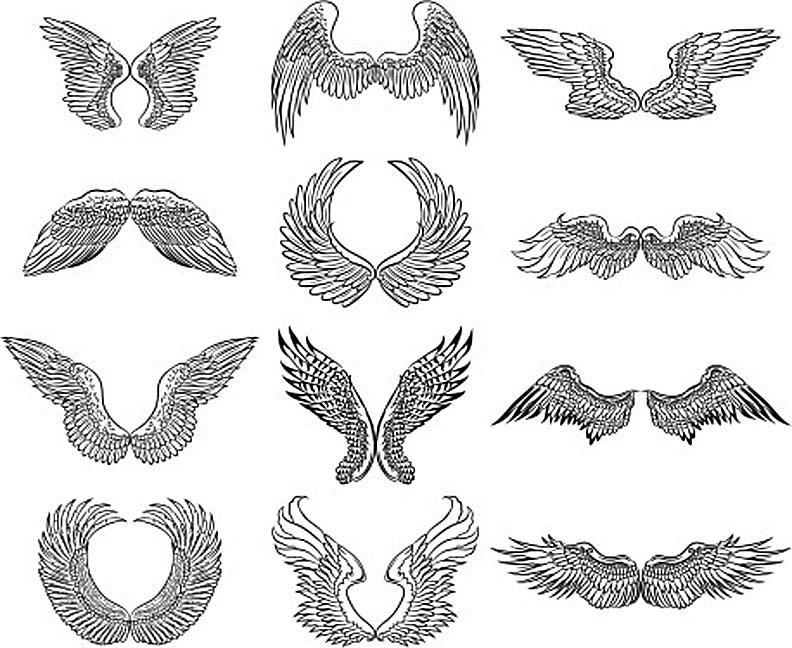 drawings of wings
