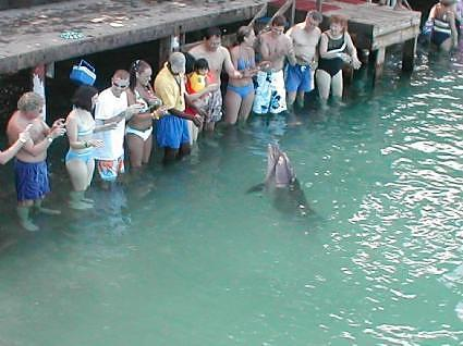 Jamaica, Shelley loves the dolphins