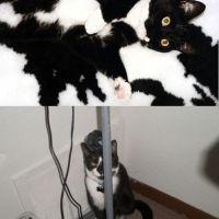 Humor Me - Cat Humor from Pinterest