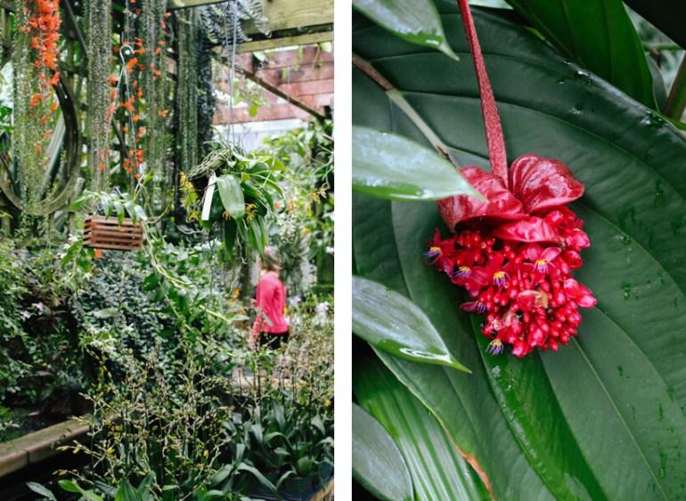 atlanta-botanical-garden-15a