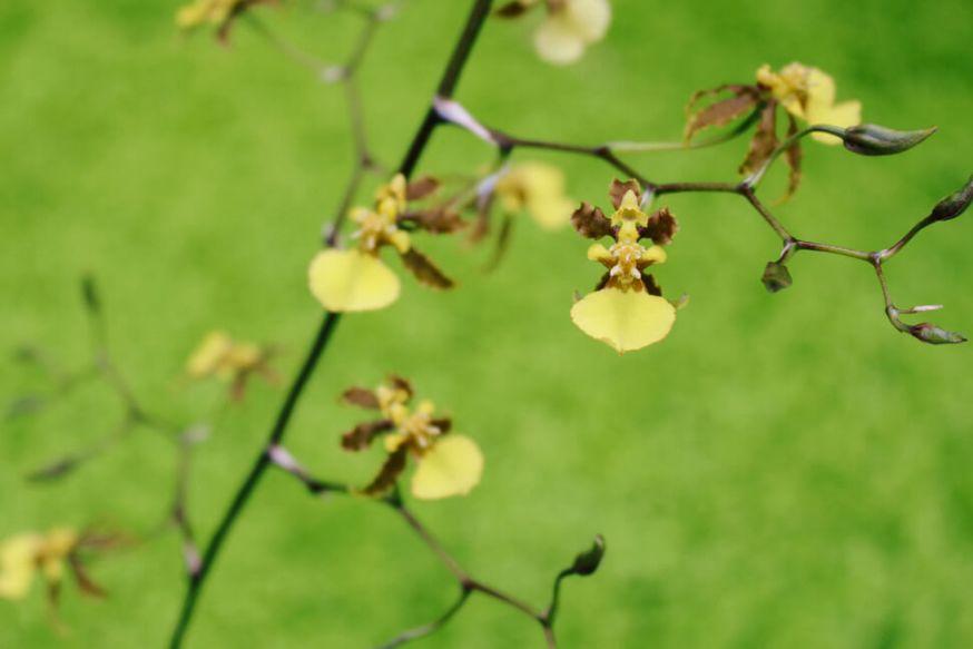 atlanta-botanical-garden-22a