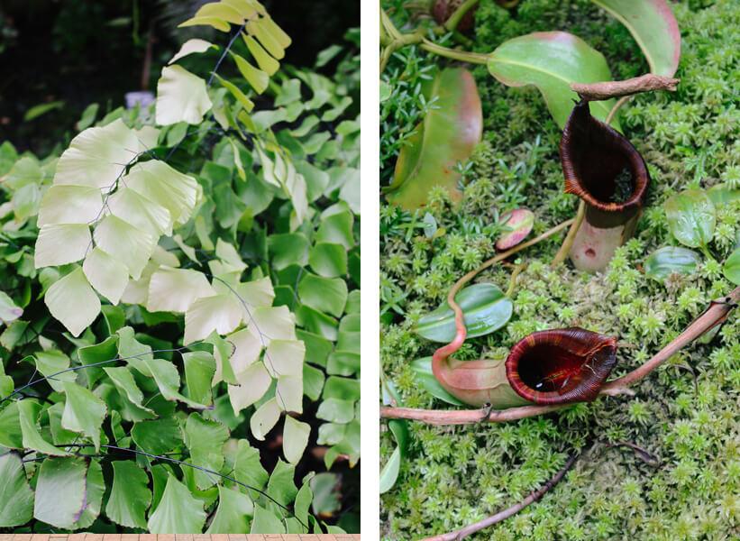 atlanta-botanical-garden-29a