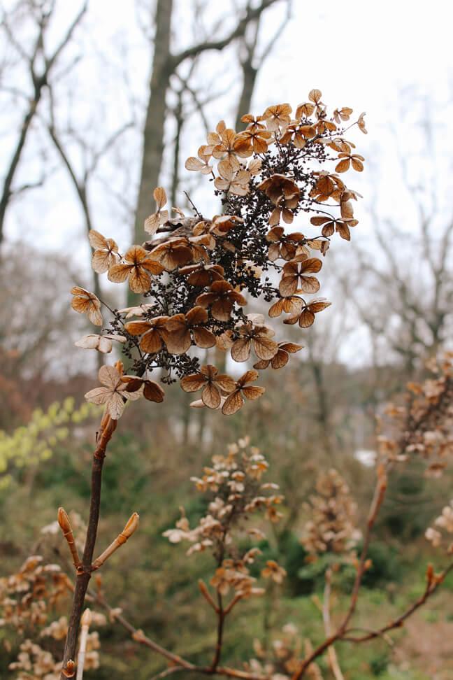 atlanta-botanical-garden-43a