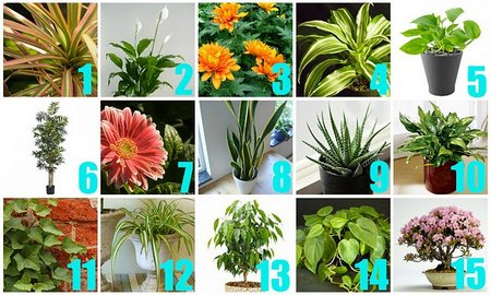 House Plants Have An Air-Cleaning Abilities - Www.Tidyhouse.Info
