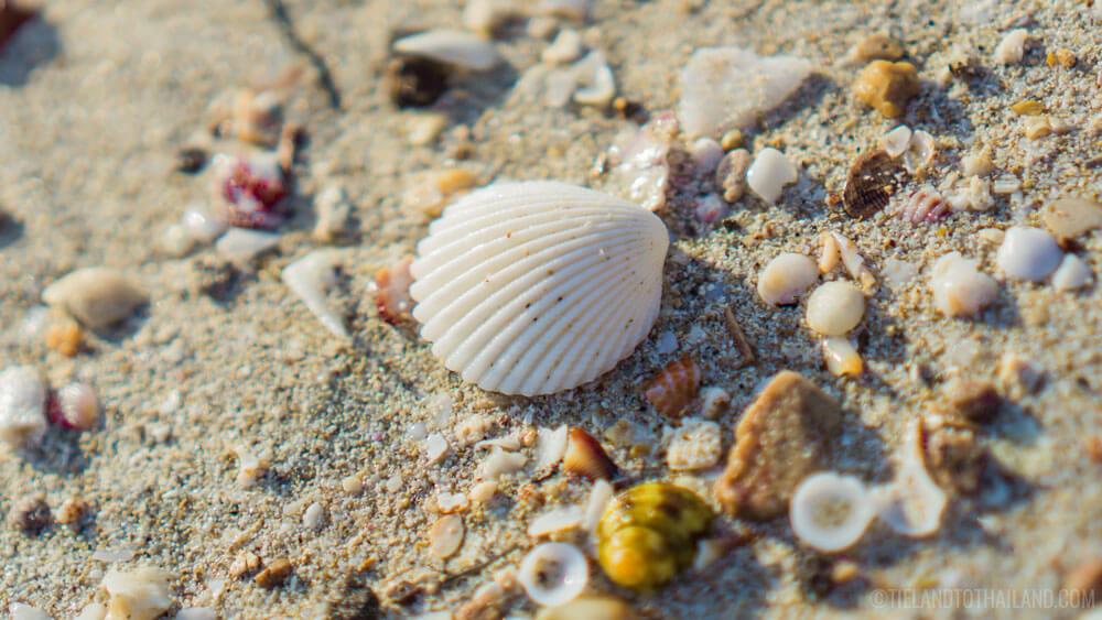 Things to do in Chumphon: Beachcombing on Thung Wua Laen Beach