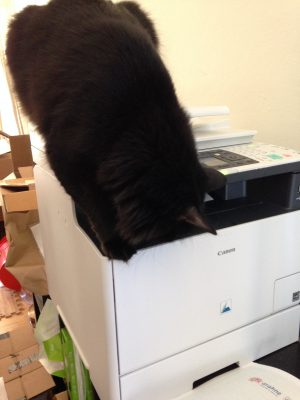 弗里兹 sticking his head into the printer