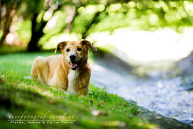 hundefoto2